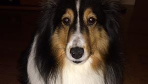 Bailey (Dog)