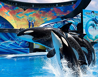 The Kids Free Package at SeaWorld® and Aquatica®